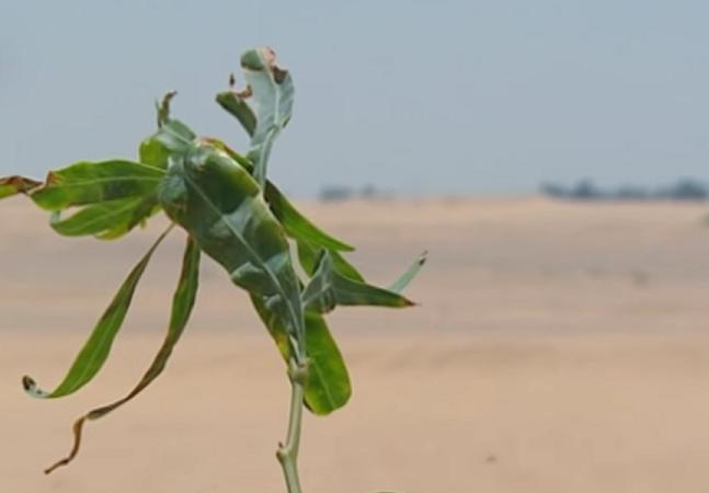 Com a ajuda de esgoto, egípcios plantam floresta em pleno deserto