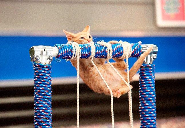 Para incentivar adoção, canal de TV norte-americano transmite Olimpíada de gatinhos