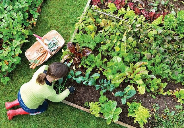 Dois cursos online gratuitos para  você aprender de vez a fazer  e manter sua horta caseira