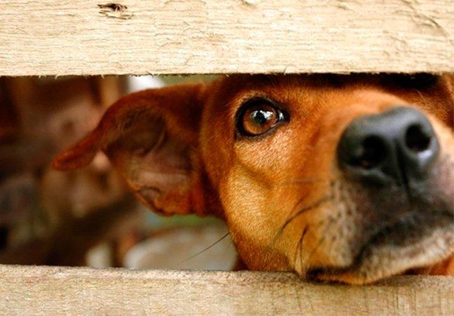 MG sai na frente e sanciona lei que fixa multa de até R$ 3 mil pra quem maltratar ou abandonar animais