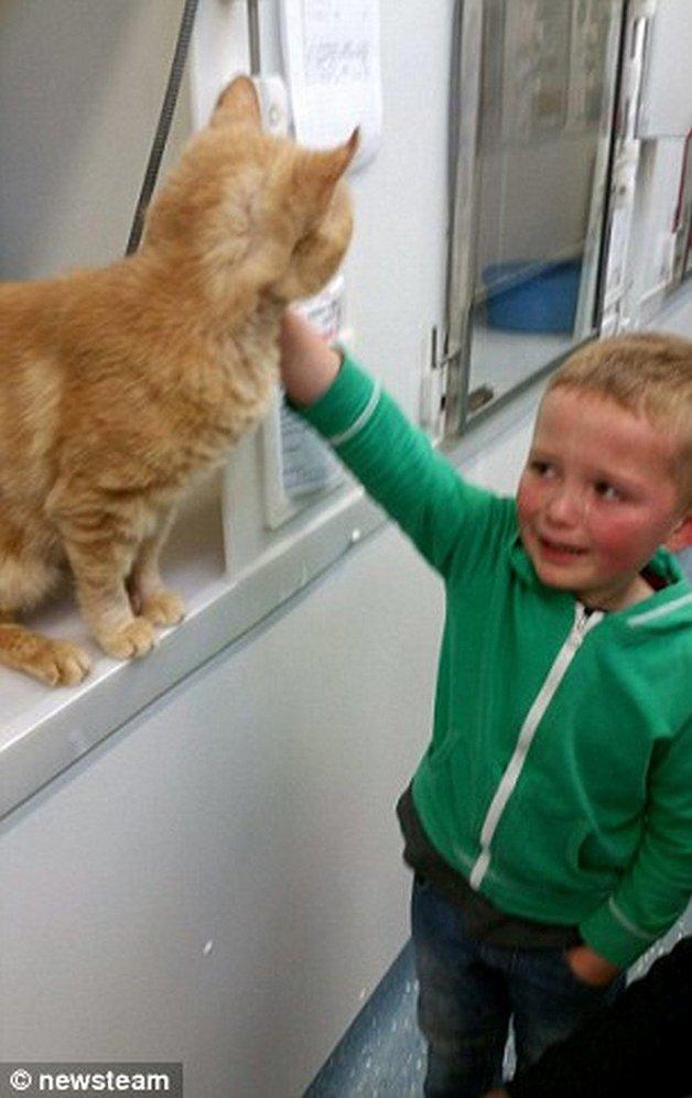 menino-reencontra-gato-1