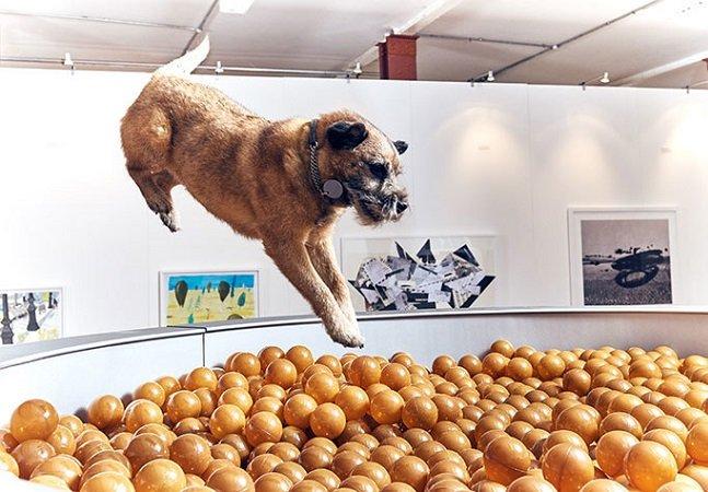 Esta é a primeira mostra de arte do mundo inteiramente pensada para cachorros