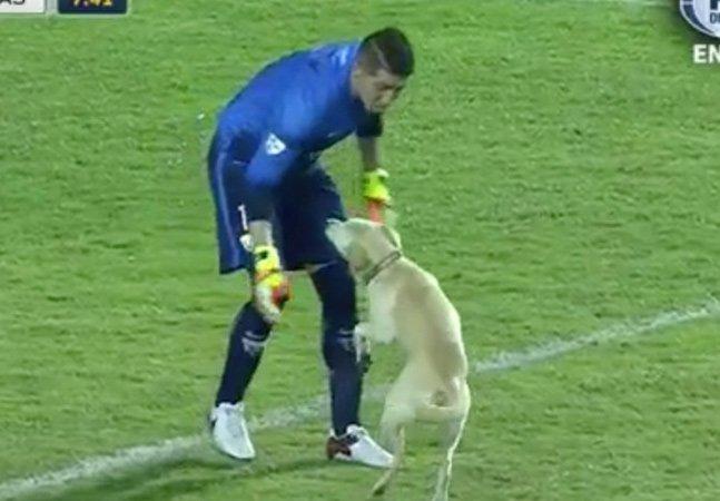 [VÍDEO] O 'cão mais feliz do mundo' invadiu um jogo de futebol e conquistou a torcida