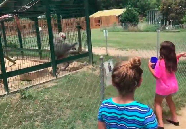 Atingidas por arremesso de cocô,  crianças aprendem da maneira mais  difícil que lugar de animal é na natureza