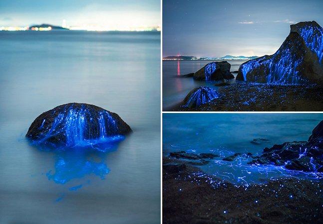 Fotógrafos capturam o maravilhoso efeito criado pela luz de camarões bioluminescentes