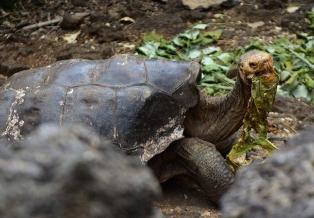 Esta incrível tartaruga de 110 anos fez tanto sexo que conseguiu salvar sua espécie da extinção