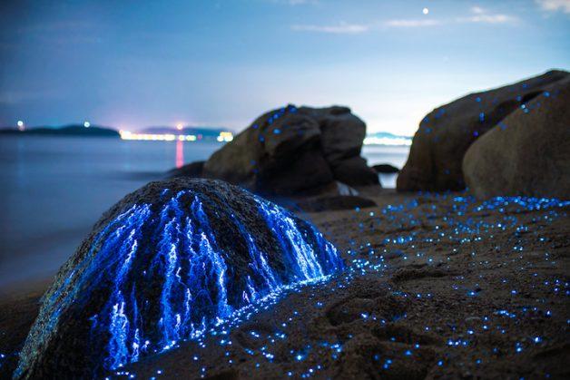tbud_photo_sea_fireflies7