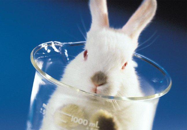 Justiça europeia emite sentença contra cosméticos testados em animais