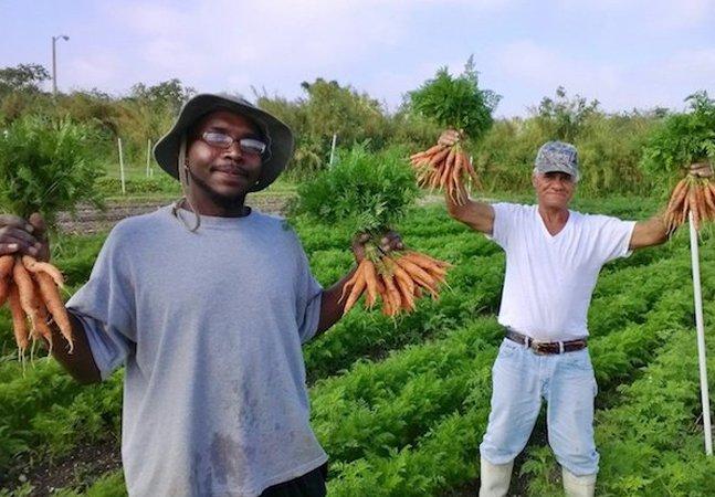 Esta fazenda produz apenas alimentos orgânicos e só contrata pessoas em situação de rua