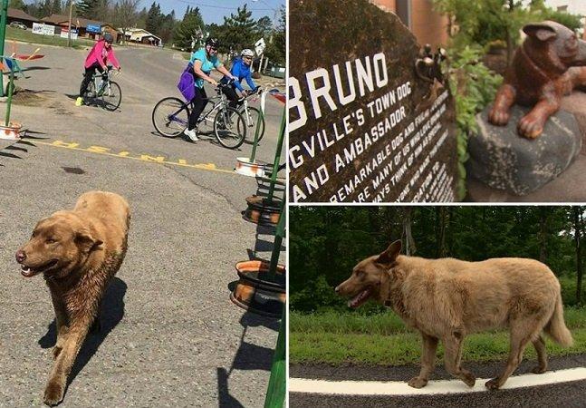 Cão percorre quilômetros diariamente para cumprimentar todos os habitantes de sua cidade