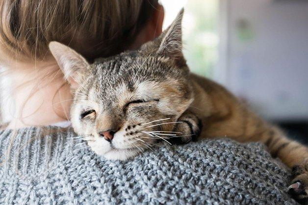cats-without-eyelids-dora-felix-12