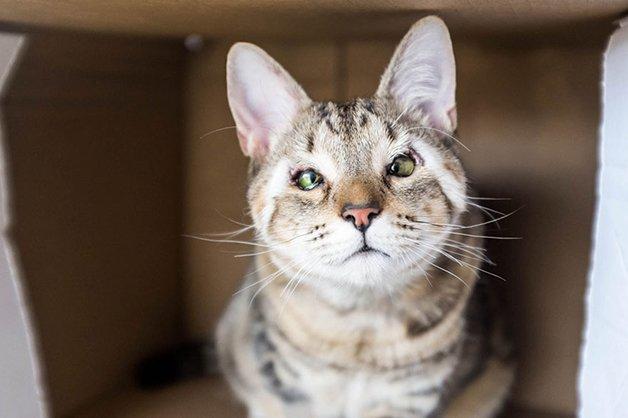 cats-without-eyelids-dora-felix-13