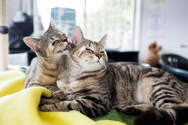 cats-without-eyelids-dora-felix-14