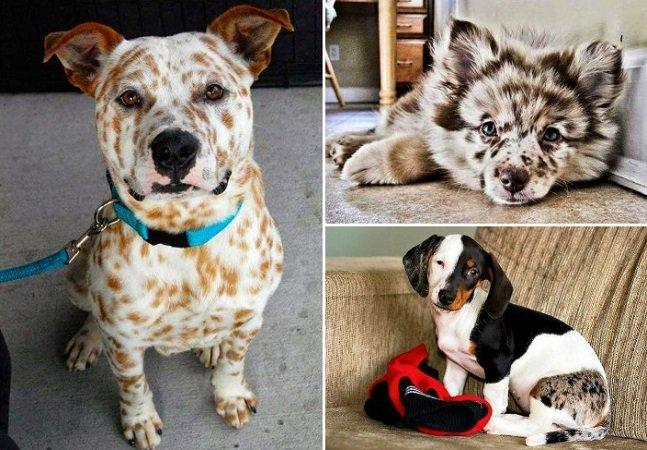 Esses cães são diferentes de todos que você já viu, mas a responsável pela 'arte' é a natureza