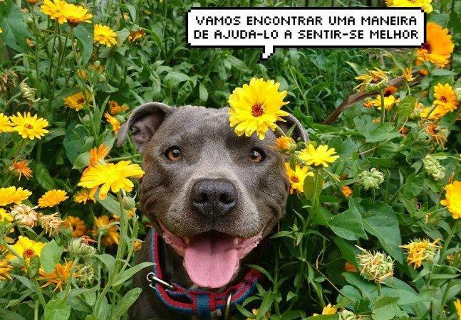 Página usa a alegria dos animais para levar mensagens positivas pra quem está passando por momentos difíceis