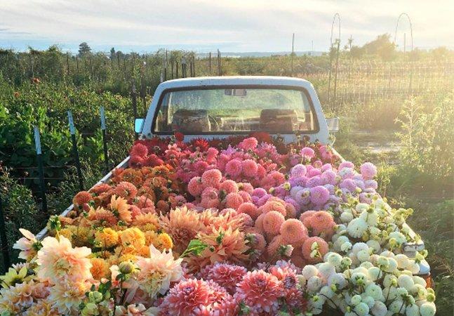 Conheça a história da mulher que deixou a cidade grande para plantar flores e ser feliz