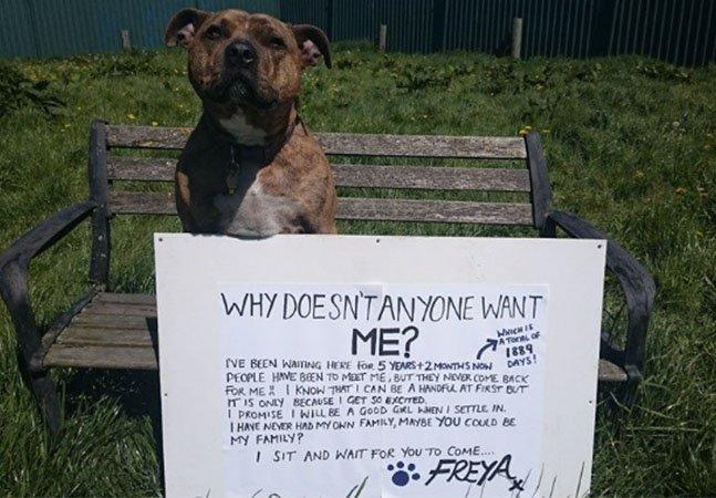 A virada de jogo do 'cão mais solitário do mundo' rumo a um final feliz