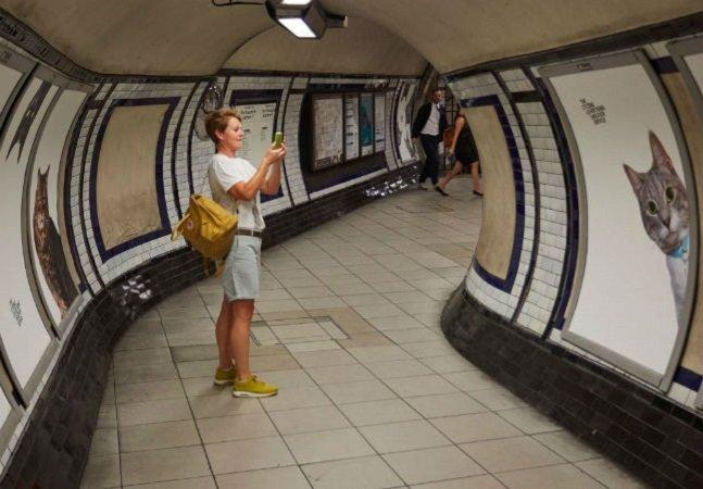 Em Londres o pessoal se cansou dos anúncios do metrô e decidiu cobri-los com gatíneos