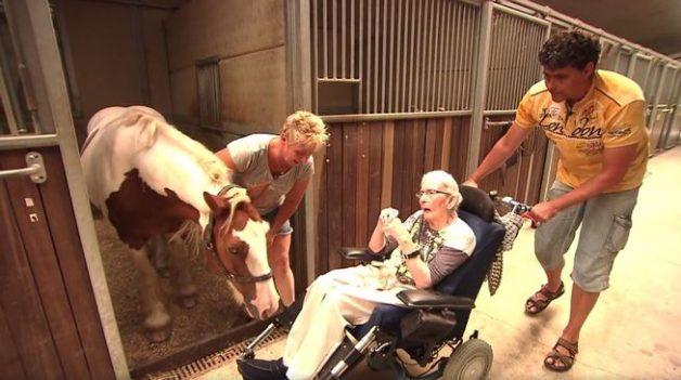 nelly-jacobs-wheelchair-horse-stall-jpg-653x0_q80_crop-smart