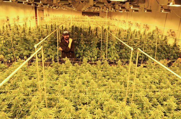 Damian em sua plantação no Colorado (Foto: Mark Sink)