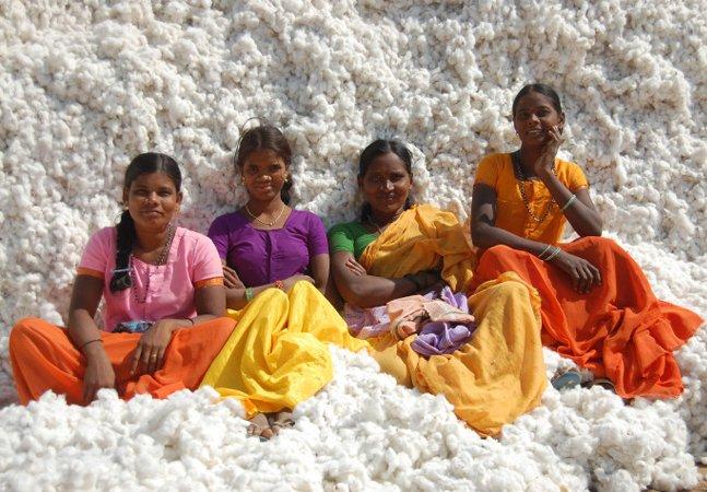 Agricultores e governo na Índia se unem para plantar algodão orgânico e fazem Monsanto perder milhões
