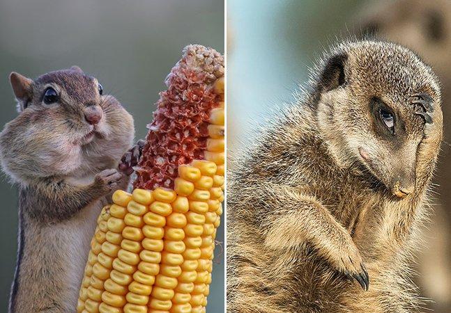 Estas são algumas das melhores imagens do concurso que elege as fotos de animais mais cômicas do ano