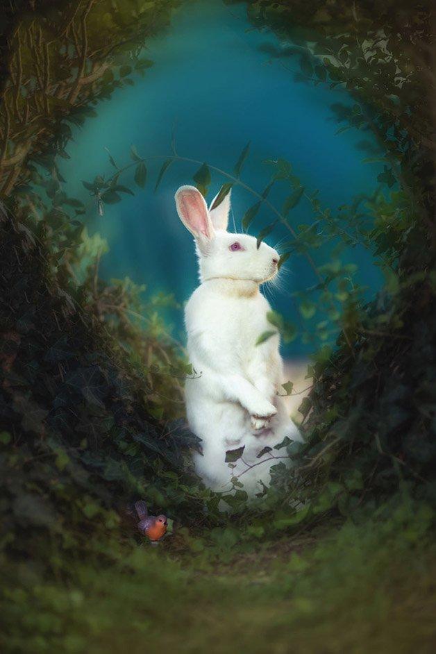 i-photograph-rescued-critters-like-children-books-characters-to-help-them-find-their-happy-endings-5808916f65af6__880