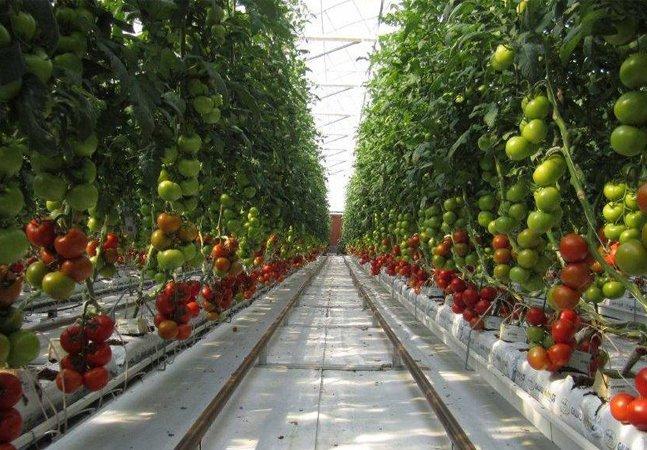 Utilizando o sol e água do mar, esta fazenda no meio do deserto produzirá 17 mil toneladas de alimento