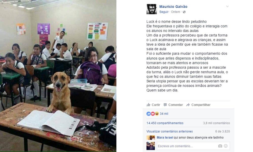 Por que essa escola ganhou um 'aluno cachorro'