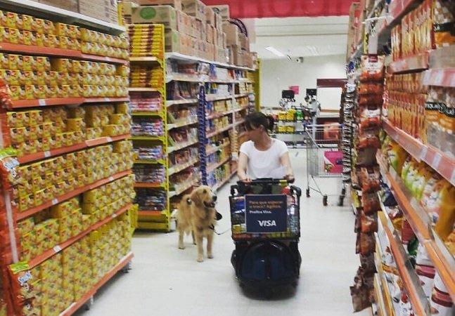 Campanha arrecada fundos para treinar cachorros que melhoram a vida de cadeirantes