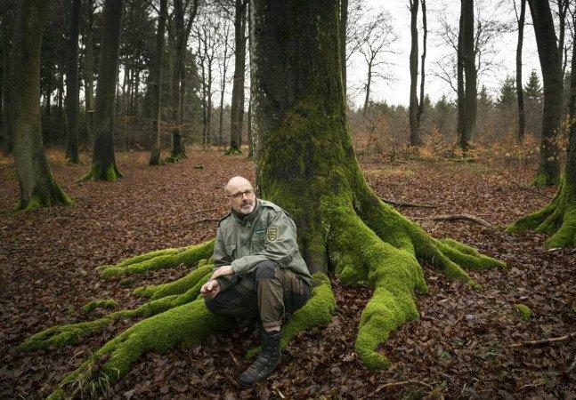 Especialista afirma que árvores podem fazer amigos e cuidar umas das outras