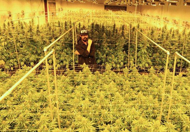Damian Marley está transformando prisão na Califórnia em plantação de maconha