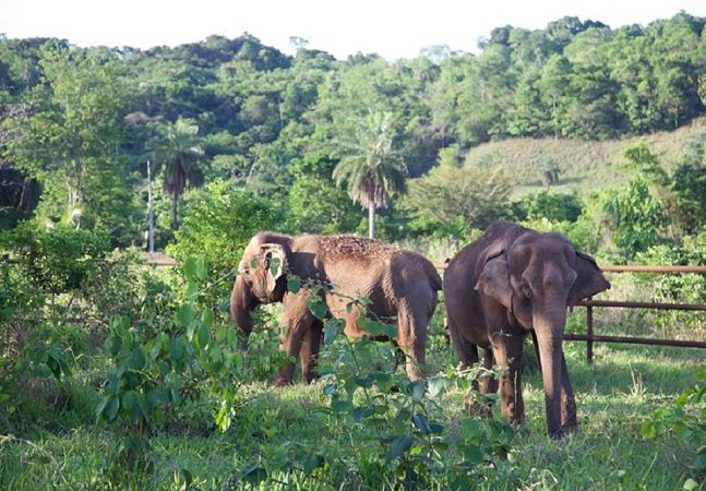 A comovente história dessas duas elefantes de circo e sua jornada rumo à liberdade