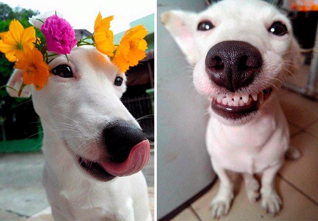 A internet não está sabendo lidar com a fofura desse catioro sorridente