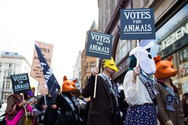 tamanho-animal_election_march_029