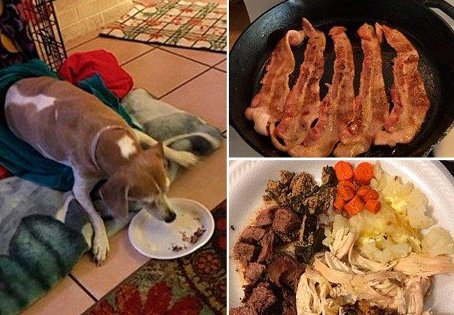 Família presenteia cachorro com suas comidinhas favoritas no último e comovente dia da sua vida