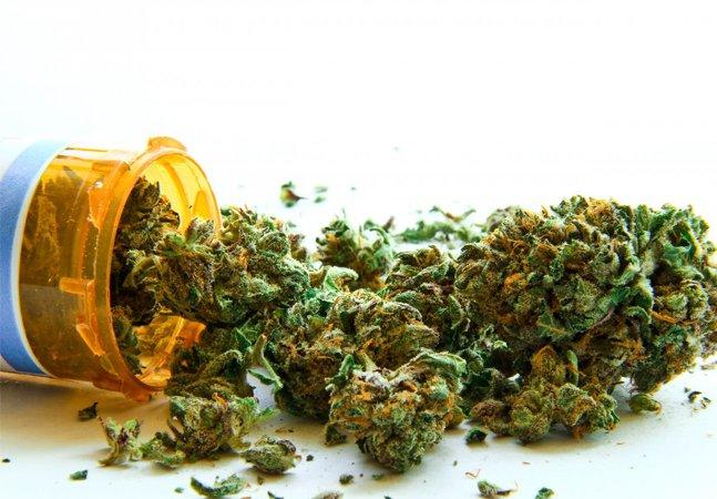 Anvisa aprova regra para uso de medicamento à base de maconha