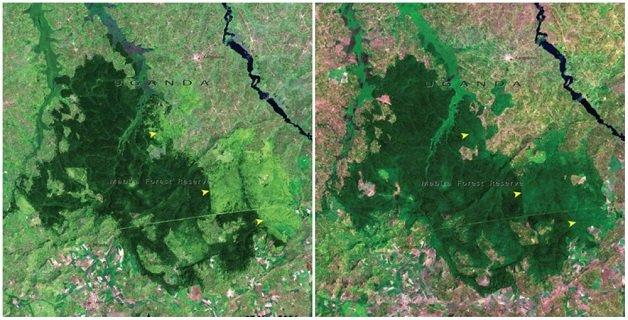 floresta-de-mabira-uganda-novembro-de-2001-e-janeiro-de-2006