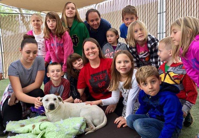 Como um exército de voluntários transformou a vida de mais de 100 cães num abrigo