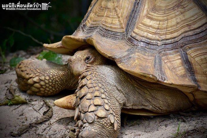 tortoisecow2