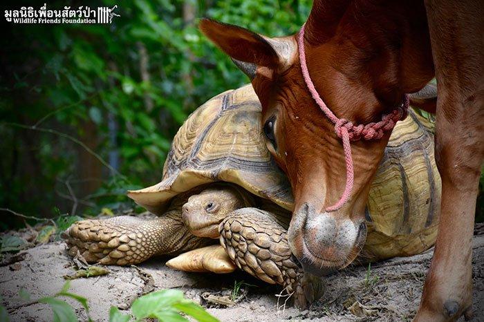 tortoisecow6