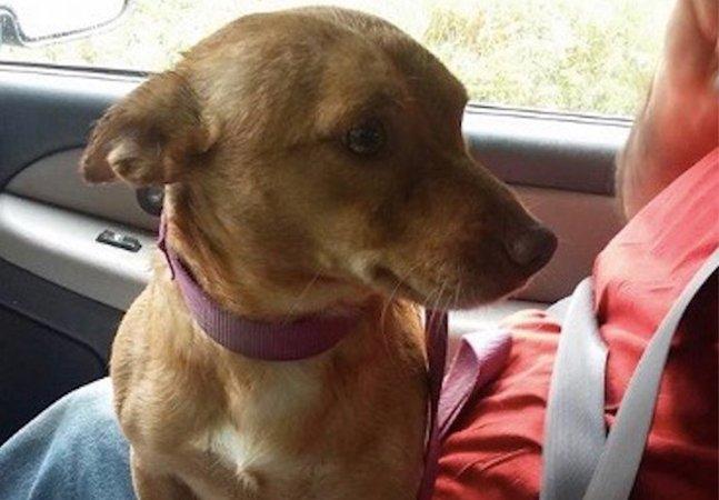 Mulher escreve mensagem viral pro 'canalha' que jogou esse cachorrinho de um caminhão e o deixou na estrada