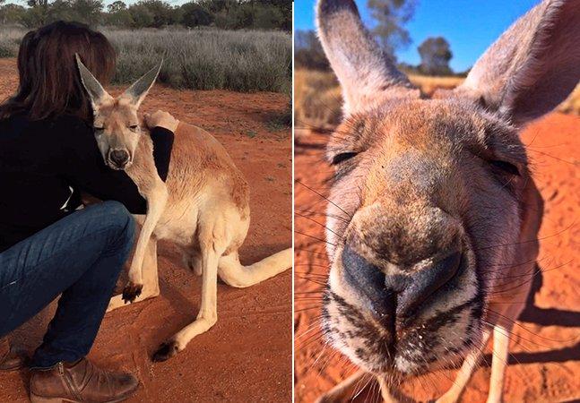 O canguru resgatado que não consegue parar de abraçar seus salvadores é a coisa mais bonita que você vai ver hoje