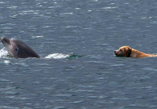 Após morte de seu companheiro, golfinho fêmea faz inusitada amizade com cachorro