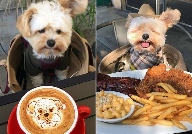 Como este cãozinho resgatado virou uma 'personalidade' da gastronomia no Instagram