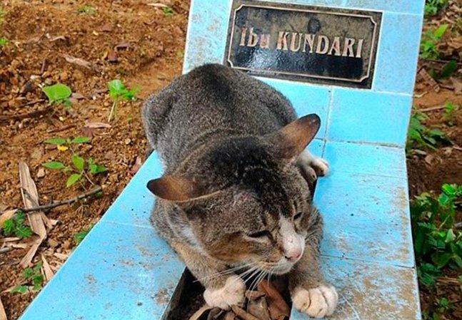 Dona faleceu há um ano e desde então sua gatinha só sai de perto de seu túmulo para comer