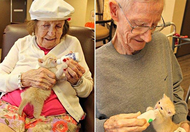 Um asilo e um abrigo se uniram para colocar idosos salvando gatinhos órfãos resgatados