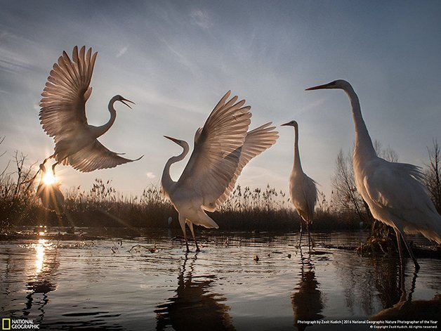 2016-national-geographic-nature-photographer-of-the-year-winners-3-584fb78a43274__880-1