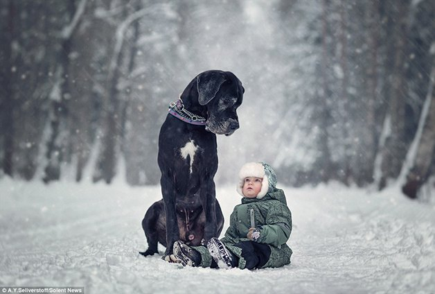 3abe7bc500000578-3971110-this_adorable_photo_shows_a_great_dane_named_wolf_watching_over_-a-39_1480073409010