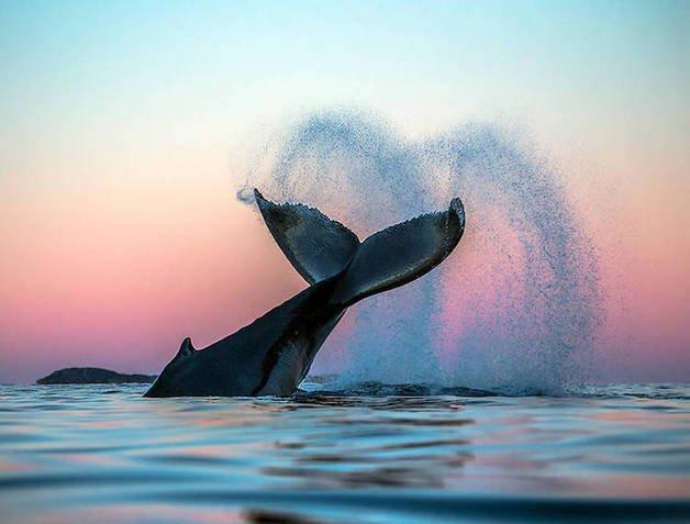 audun-rikardsen-whales-83
